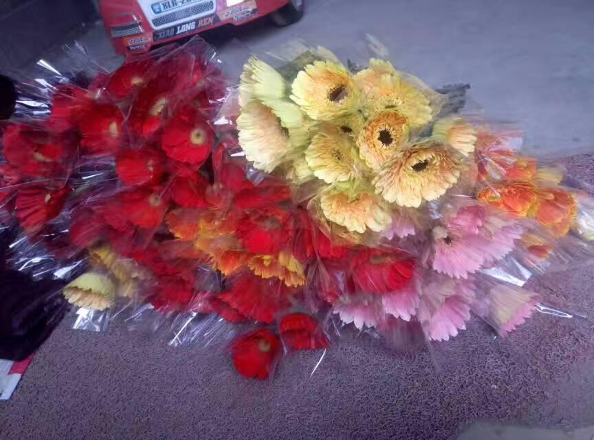 山东玫瑰种植基地-扶郎花