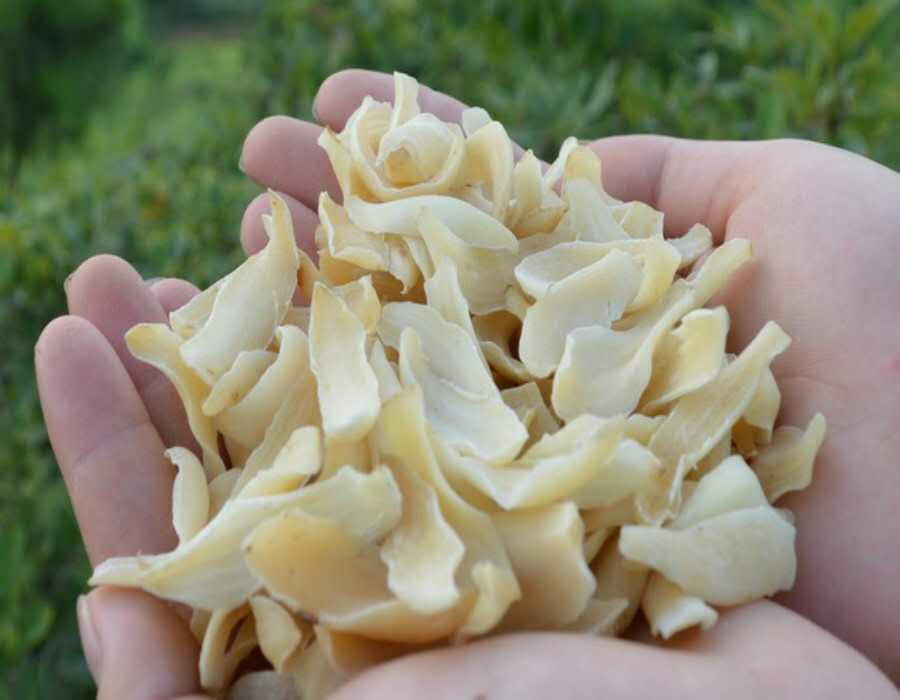 要买的无硫百合干、兰州金兰农产品是您上好的选择甘肃无硫百合干
