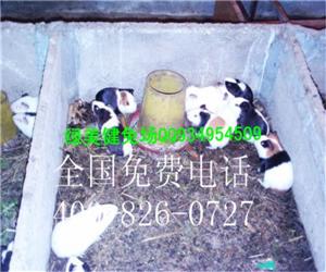 杨浦白豚彩豚商品豚高价求购