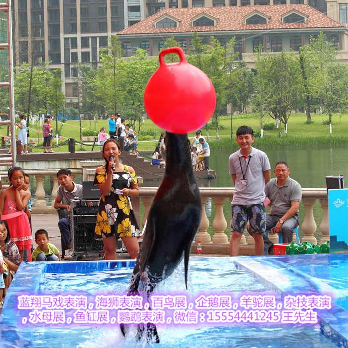租赁羊驼海狮表演、绍兴市、活体企鹅租赁