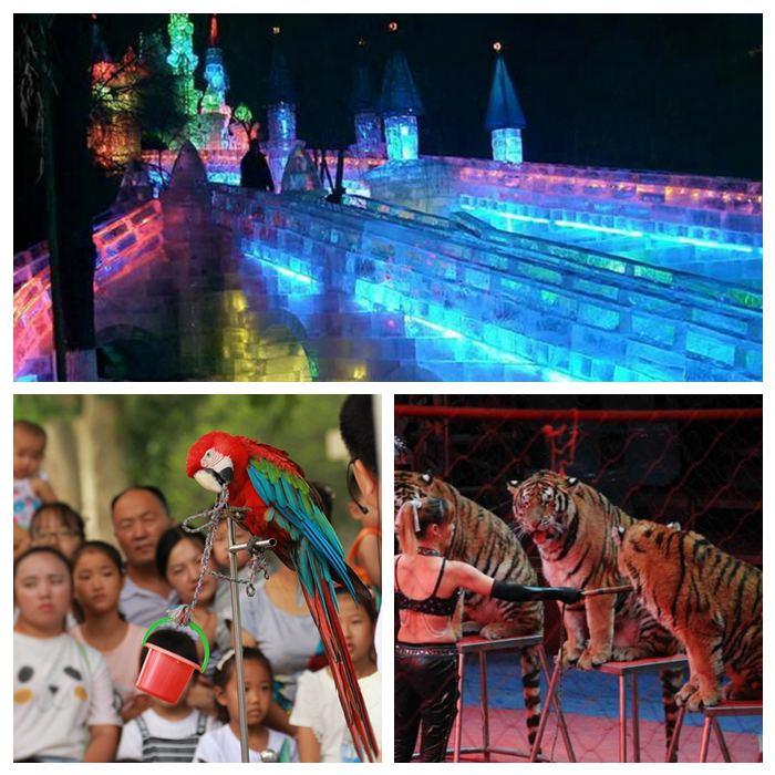租赁海狮表演、丽水市、马戏团有什么表演