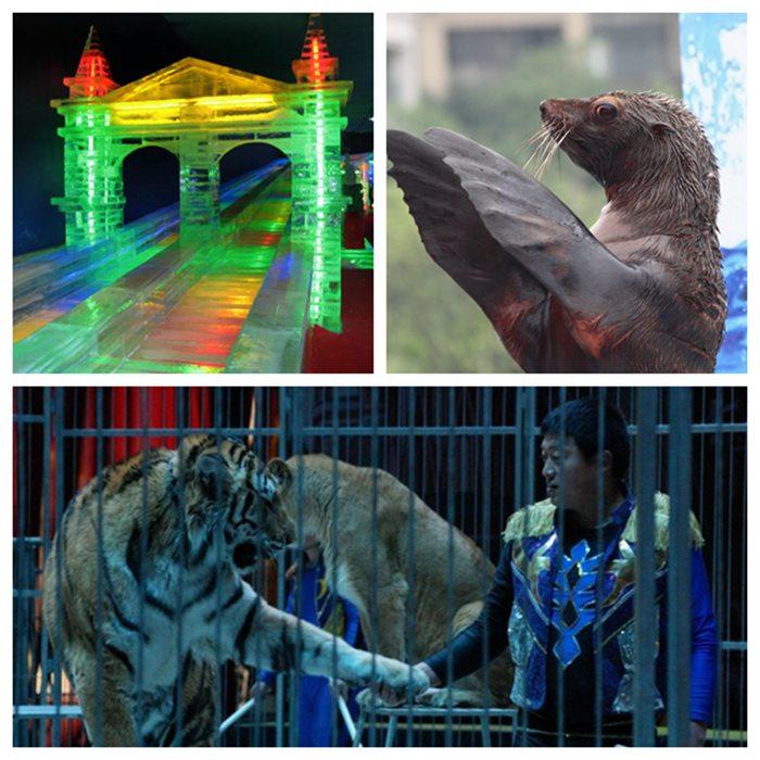 租赁海狮表演、贵港市、怎么提高产品知名度