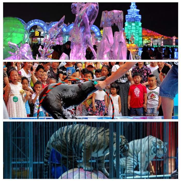 出租海狮海洋生物、钦州市、马戏团出租