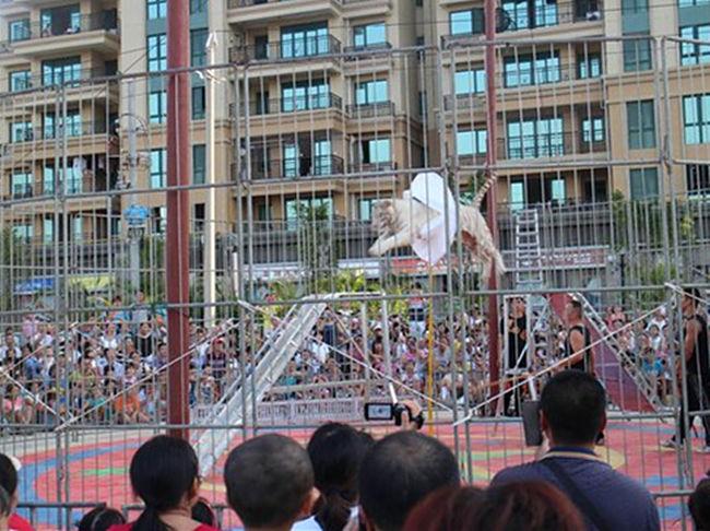 海狮表演出租、宜州市、出租海狮表演节目