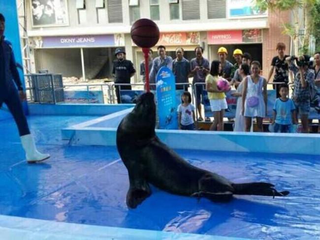 企鹅租赁海狮表演、吕梁市、马戏团表演出租