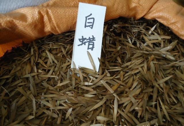 白蜡种子价格是多少钱一斤及育苗技术