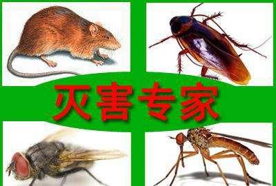 泰安灭蟑螂、泰安灭老鼠、酒店灭蚊蝇、宾馆灭蟑螂、家庭住宅灭老鼠