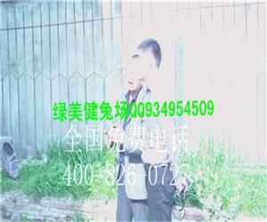 江西九江庐山上海那有荷兰猪养殖场