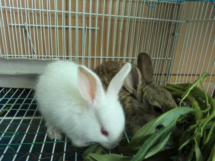 普洱道奇猫猫兔养殖