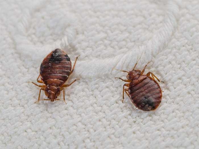 银川杀虫当选宁夏金卫士 银川杀虫除虫哪家好宁夏除蟑螂