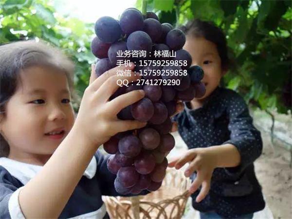 广东叶面肥配方 营养成份高品质保证
