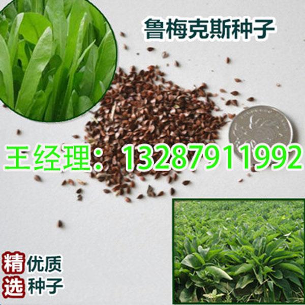 山东珠丰园林种业