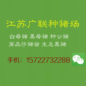 江苏省销售三元猪苗的供应商