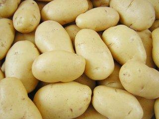 东平土豆批发 热销土豆
