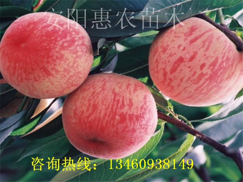 阜新18年核桃苗、汉中核桃苗介绍、广州核桃苗