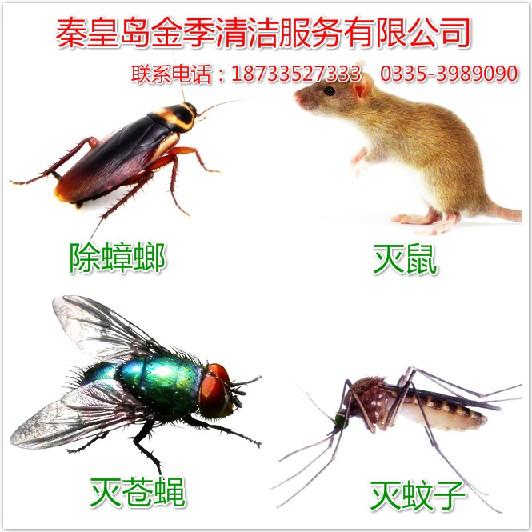 秦皇岛金季清洁服务-有品质的除四害提供商、秦皇岛除蚊子哪家好