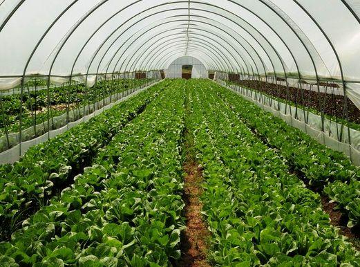 广西温室大棚、专业蔬菜大棚安装