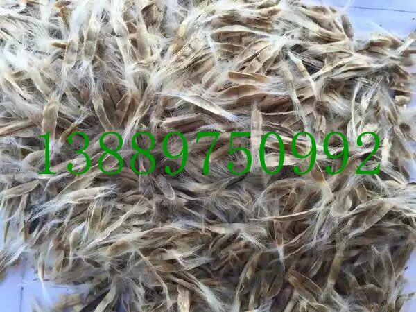 辽宁省梧桐种子价格一览表