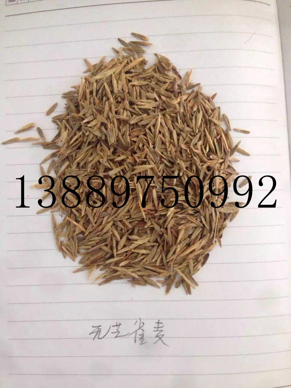 辽宁省无芒雀麦种子价格一览表