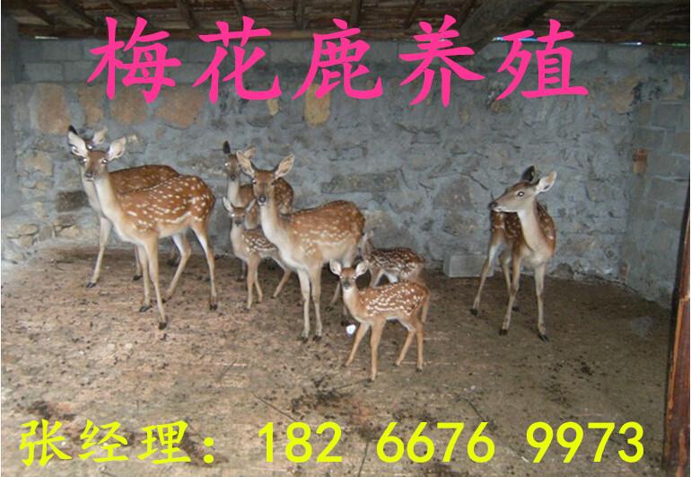 江�K徐州出租�R��F�r格是多少