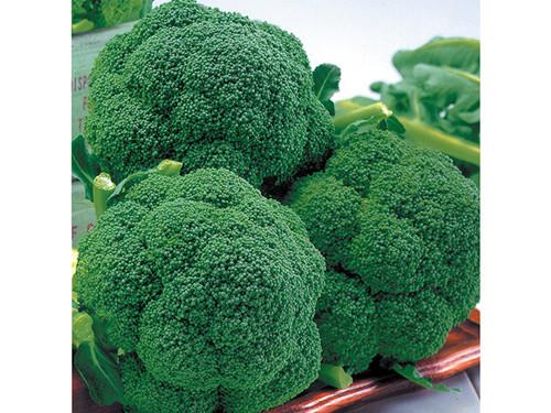 西兰花种子认准布鲁斯农业科技——西兰花种子