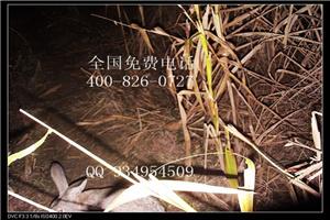 广东汕尾养兔子设备