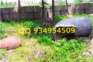 阜阳种兔养殖兔肉供应