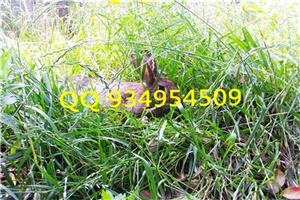 亳州比利时野兔养殖基地