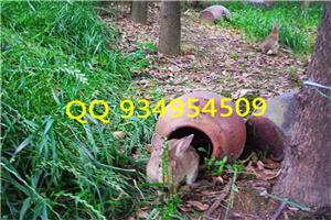 广东惠州养兔子设备