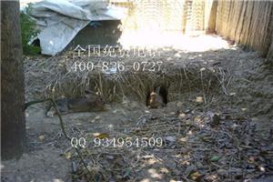 滁州养殖吃草动物