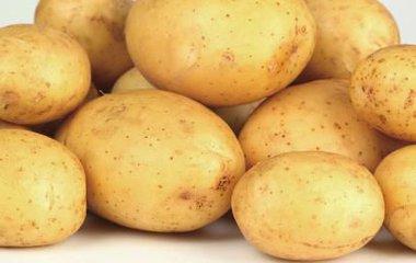 供应泰安热卖土豆,济南土豆批发
