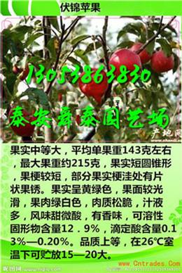 天津哪里有早熟苹果苗主产区批发