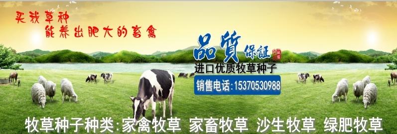 海阳哪里有卖草坪牧草种子的求地址