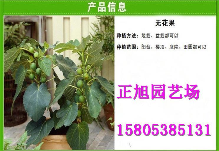 重庆哪里有售卖嫁接用果树实生苗得多少钱才卖