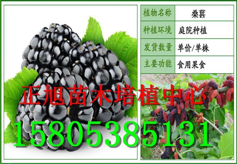 福建南平柱状梨树苗哪里有卖的、价格详情