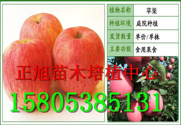 云南迪庆州柱状梨树苗主要货源集中地在哪、亩种数量