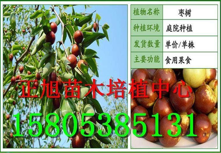 宁夏石嘴山柱状梨树苗哪里能买到果树苗价格详情