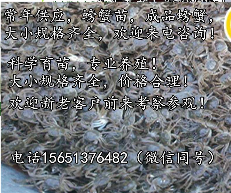贺州淡水小龙虾苗养殖场龙虾苗