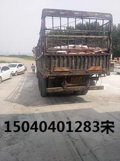 双城速凝水泥价格15040401283宋宏涛