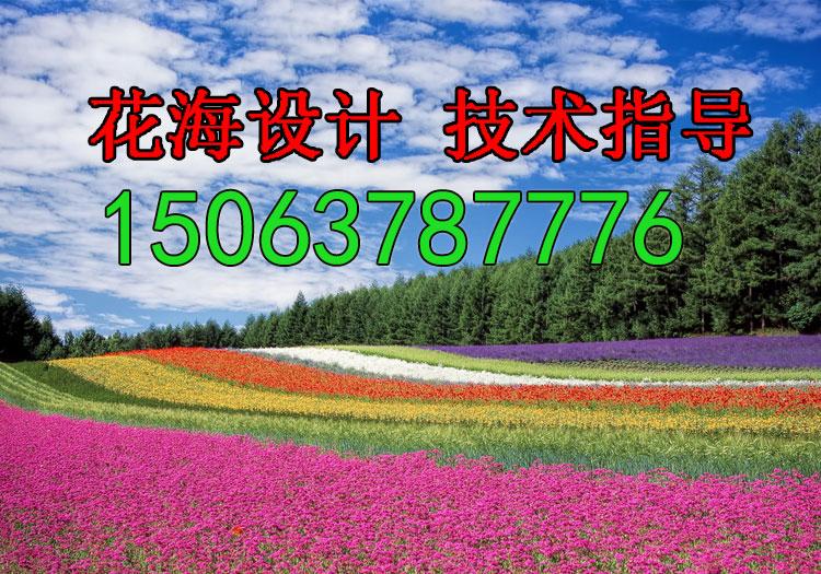 特价批发护坡草坪种子护坡王草我公司欢迎您