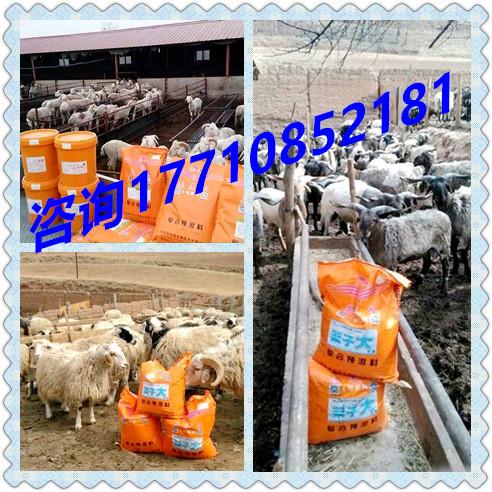 种羊核心料那种羊长得快