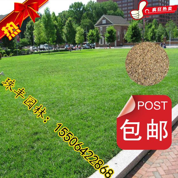 浙江嘉兴-高尔夫球场草坪种子供应-生产厂家-厂家直销