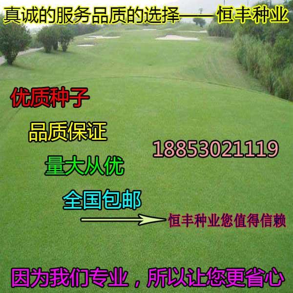 云南文山四季青草坪种子厂家包邮