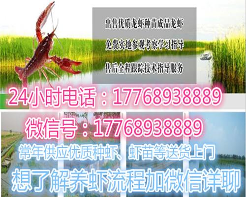 安溪钱柜娱乐官网淡水小龙虾苗多少钱-欢迎您的咨询