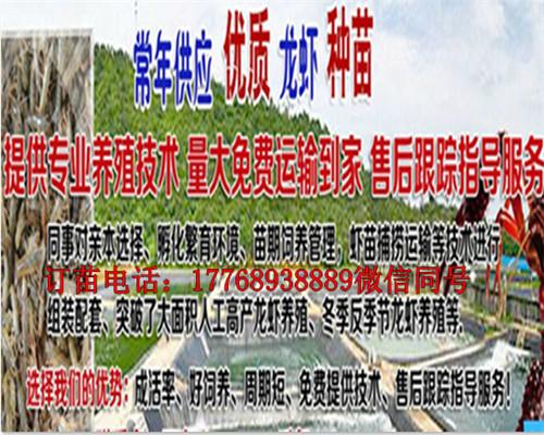 欢迎光临、迪庆小龙虾苗养殖基地、实业有限公司