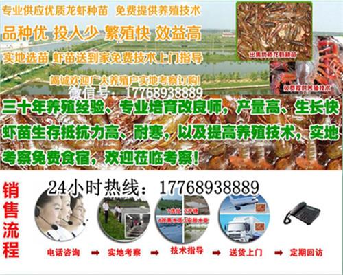 内江小龙虾种虾养殖技术、内江有限公司欢迎您的到来