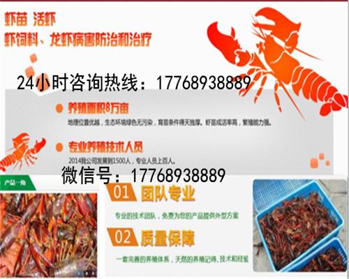 梁河供应淡水小龙虾种虾怎么养殖-欢迎您的咨询