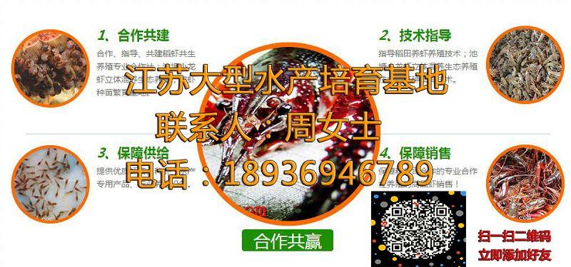 龙岩新罗小龙虾苗养殖技术龙岩新罗供应厂家