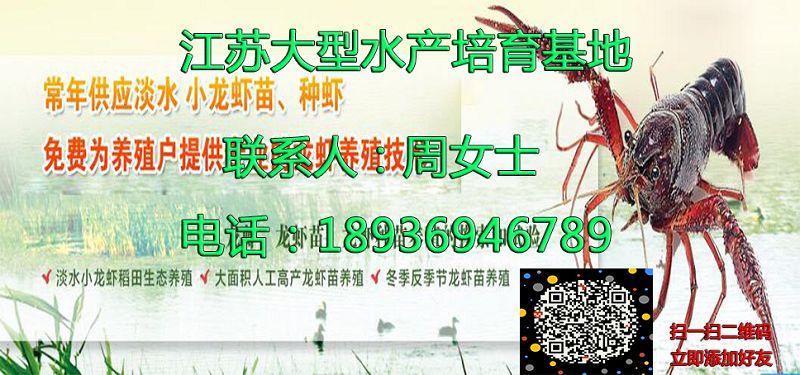 长沙开福淡水小龙虾养殖技术长沙开福供应厂家