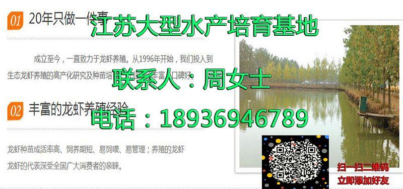扬州高邮淡水小龙虾繁殖技术扬州高邮欢迎实地考察